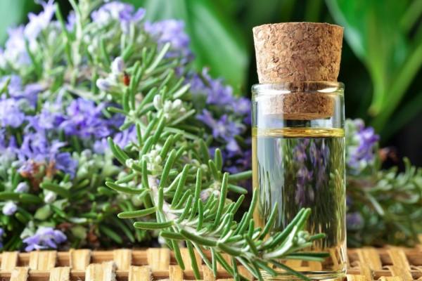 Olio essenziale di rosmarino per aiutare la memoria dei bambini