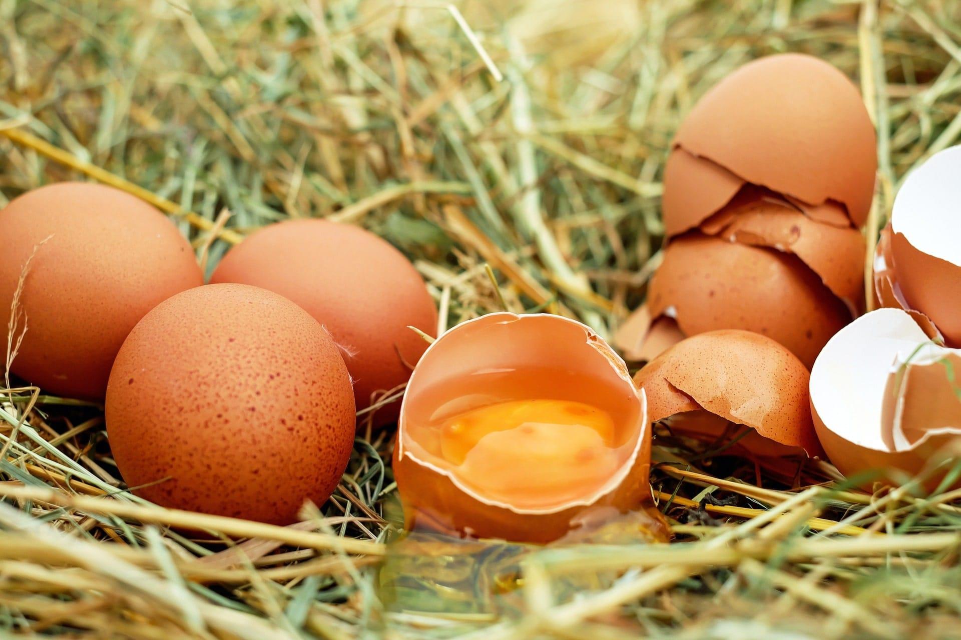 uova nei neonati da quando