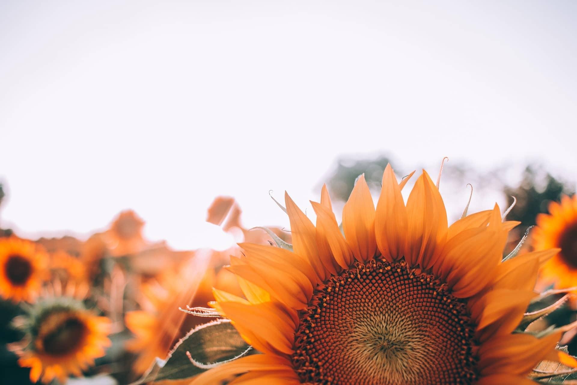 5 fiori commestibili