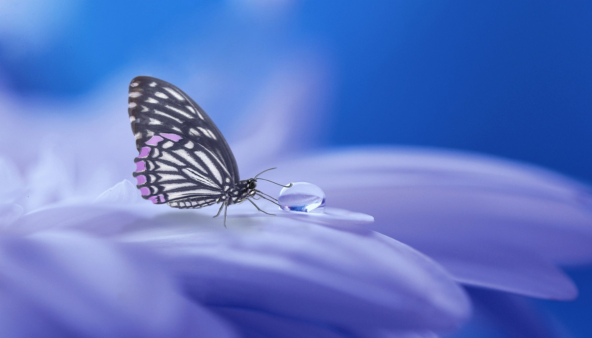butterfly 3054736 1920 - Home