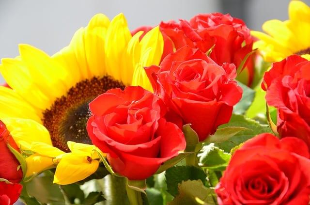flowers 255159 640 - Girasole: significato nel linguaggio dei fiori