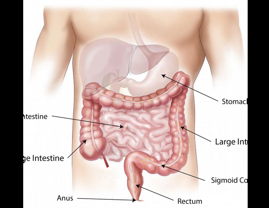 abdomen 1698565 1280 - Aderenze addominali: sintomi, cause e cura